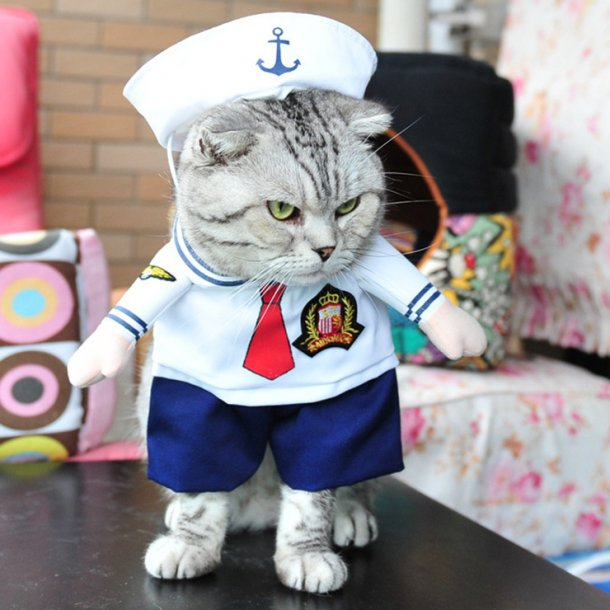 Sailor Costume Dressing Up Party for Cats