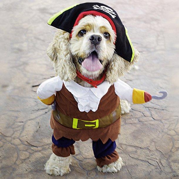 Puppy's Pirate Costume